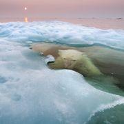 Obwohl Eisbären sehr gute Schwimmer sind, jagen sie üblicherweise an Land. Zwei Minuten unter Wasser bereiten ihnen keine Schwierigkeiten.