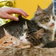Bauer aus Appenzell verspeist seine Katzen (Foto)