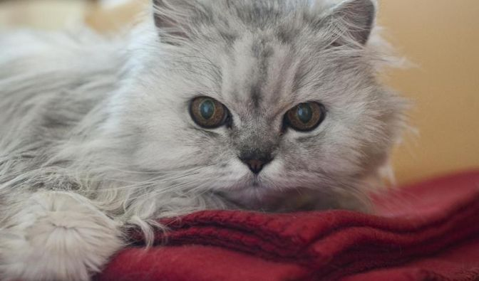 Katze sind Meister der Gemütlichkeit. (Foto)