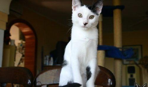 Auch Katzendamen können aussehen wie Adolf(ine).