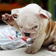 Dieser kleine Kerl hat auch gleich die richtige Geste drauf.