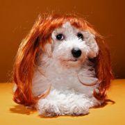 Peggy Bundy als Hund. Eher verstörend als antörnend.