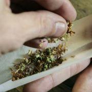 Marihuana kommt immer öfter aus Mecklenburg-Vorpommern.