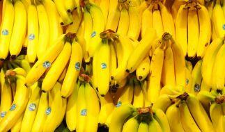 Zwischen unschuldigen Bananen wie diesen sollen große Mengen Koks versteckt worden sein. (Foto)