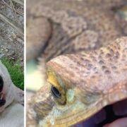 Den Tierarten sind bei Animal Selfies keine Grenzen gesetzt.