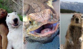 Den Tierarten sind bei Animal Selfies keine Grenzen gesetzt. (Foto)