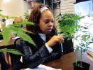 Angeblich steht der medizinische Nutzen der Cannabis-Pflanze im Vordergrund. (Foto)