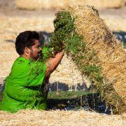 Muss bis zur äußersten Schmerzgrenze gehen, um in der neuen Challenge nur den Hauch einer Chance zu haben: Shahin ...