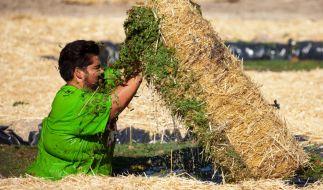 Muss bis zur äußersten Schmerzgrenze gehen, um in der neuen Challenge nur den Hauch einer Chance zu haben: Shahin ... (Foto)