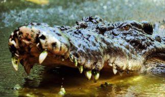 Zwei illegale Kroko-Killer posieren im Internet neben den von ihnen erlegten Krokodilen. Nun werden die Jäger zu Gejagten. (Foto)