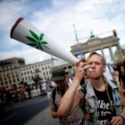 Platz 8: Cannabis