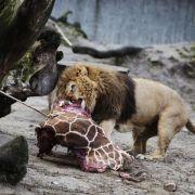 Proteste nach Tötung von Giraffe in dänischem Zoo (Foto)
