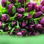 Es muss nicht immer die Rose sein - Ideen zumValentinstag (Foto)