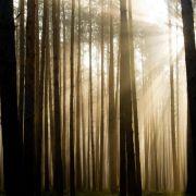 Wald bleibt für Neueinsteiger ein sperriges Investment (Foto)