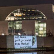 SPD-Expertin: Bundesregierung hat bei Genmais versagt (Foto)