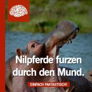 Auf über 200 Seiten finden sich in «Nilpferde furzen aus dem Mund» allerlei interessante Daten und Fakten.