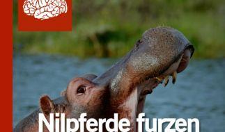 Auf über 200 Seiten finden sich in «Nilpferde furzen aus dem Mund» allerlei interessante Daten und Fakten. (Foto)