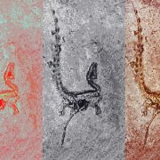 Gefiederte Dinos wurden erst bunt und hoben dann ab (Foto)