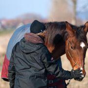 Vom Galopp ins Schritttempo: Was alten Pferden guttut (Foto)