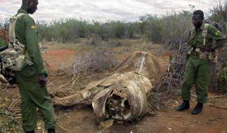 Afrika kämpft um seine Tiere: Wilderei bedroht Elefant und Nashorn (Foto)