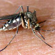 Wie Nazi-Mücken den Krieg gewinnen sollten (Foto)