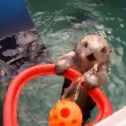 So cool spielt Otter Eddie Basketball (Foto)