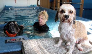 Hunde-Fitness ist aus den USA herübergeschwappt. (Foto)
