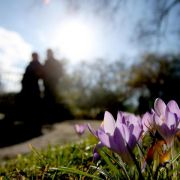 Winter adé? Meteorologen messen viel zu milde Temperaturen (Foto)
