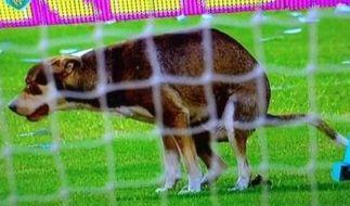Das Spiel zwischen Rosario und River Plate war diesem Hund echt Wurst. (Foto)