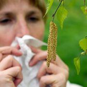 Angriff aus der Luft - Pollenallergiker müssen auf der Hut sein (Foto)