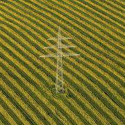 Malven statt Mais - Alternative Energiepflanzen im Test (Foto)