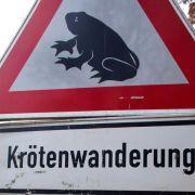 Autofahrer aufgepasst:Kröten jetzt schon auf Wanderschaft (Foto)