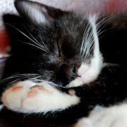 Tierquälerei: Soldat tötet Katze (Foto)