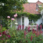 Gärten mit nur einer Blütenfarbe gestalten (Foto)