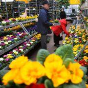 Früher Frühling: Gartencenter rechnen mit Kundensnsturm (Foto)