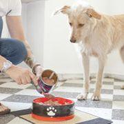 Juckreiz und Triefauge: Allergien beim Hund nicht heilbar (Foto)