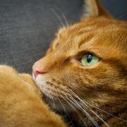 Grausam! Frau trocknet ihre Katze zu Tode (Foto)