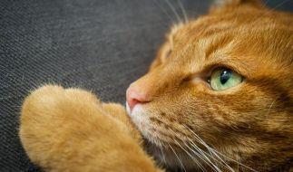 Schon einige Vorfälle sind bekannt, in denen Tiere zum Spaß oder zur Strafe in der Mikrowelle getötet wurden. (Foto)