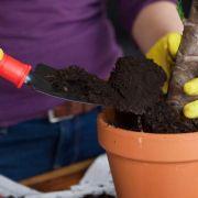 Auf Gartenerde mit Torf der Umwelt zuliebe verzichten (Foto)