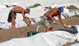 Merkel: Allgemeiner Mindestlohn nur ohne Job-Verluste (Foto)