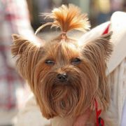 Ängstliche Artgenossen:Wie Halter ihrem Hund Mut machen (Foto)