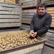 Russland blockiert Pflanzkartoffeln (Foto)