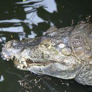 Krokodil stirbt bei tierischem SM-Sex (Foto)
