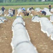 Mindestlohn ab 2015 erzürnt die Obst- und Gemüsebauern (Foto)