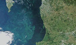 Extreme Ausdehnung von Todeszonen in der Ostsee (Foto)