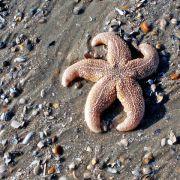 Strandgut eignet sich nicht als Deko fürs Aquarium (Foto)