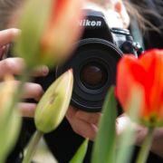 Für Makroaufnahmen das richtige Objektiv wählen (Foto)