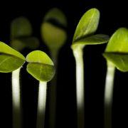 Groß, schlank und gut aussehend - Pflanze sucht Topf (Foto)