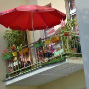 Kräuter auf dem Balkon mit Blumen kombinieren (Foto)