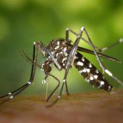 Dengue-Fieber: Rasante Ausbreitung um die Welt - bis nach Europa (Foto)